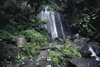 Proyectos de ciencias sobre la selva para niños de primer año de primaria | eHow en Español