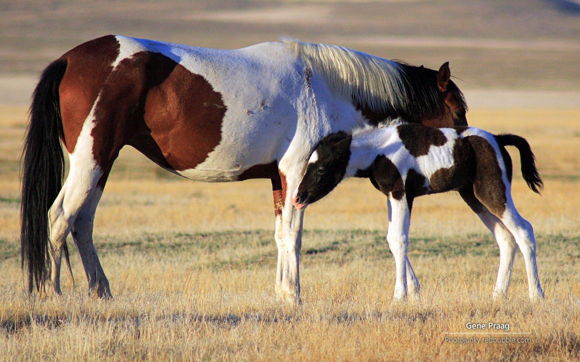 脱缰野马 动物 优质 精选