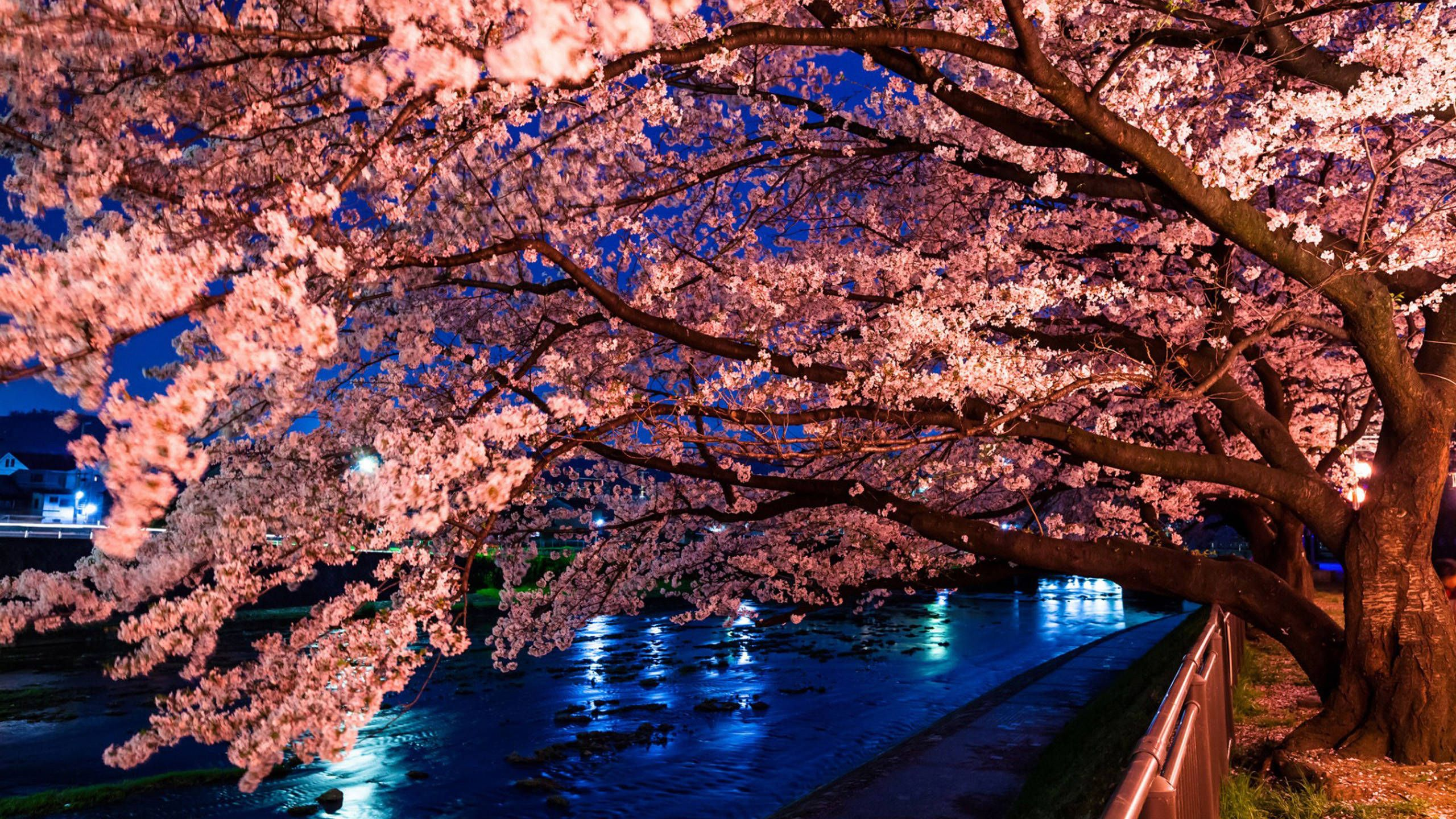 Anime Wallpaper Cherry Blossom Tree 0795 Sakura Tree Wallpaper Woodenboxlwp High Quality Hd 09 July 2018 Anime Cherry Blossom Wallpaper Japanese Cherry Bloss