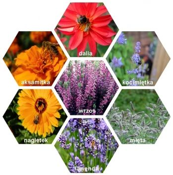 Balkon Przyjazny Pszczolom Artykuly Garden Home Decor Terrarium
