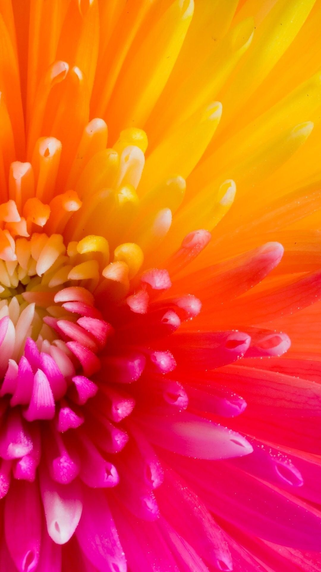 Beautiful Colourful Flower Petals. Collection of 47 Macro Flowers & Nature Wallpapers for iPhone ...