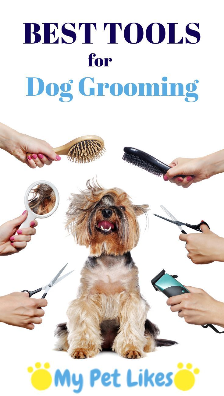Best tools for dog grooming dog grooming grooming dog