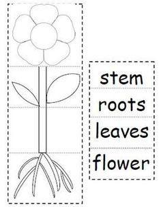 plant parts flip book classroom science parts of a plant kindergarten science plants. Black Bedroom Furniture Sets. Home Design Ideas