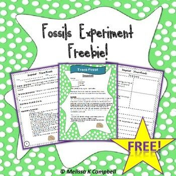 Fossils Worksheet Worksheets Experiments Freebie Science Fair Fossils Activities 4th Grade Science Fossil worksheets 4th grade