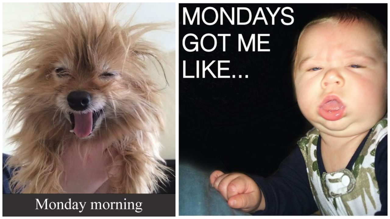 26 Monday Memes Smile Funny monday memes, Monday humor
