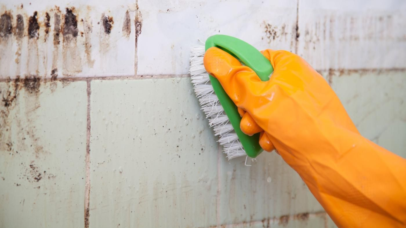 Top 10 Best Black Mold Removal Ways Mold remover, Kill