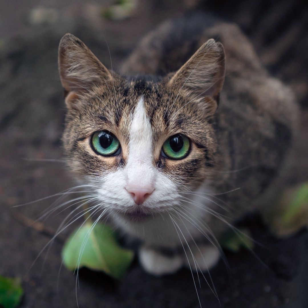4 Signs Of Parasite Infections In Cats In 2020 Cats Animals Pets Cats