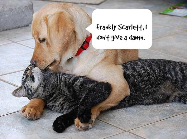 Dogs And Cats Living Together Mass Hysteria Take A Look At These Unlikely Companions With Images Dogs Hugging Dog Kisses Labrador Retriever Puppies