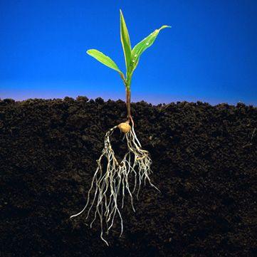 raices de las plantas - Buscar con Google