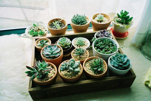 miniature succulent garden fleurs et plantes d 39 int rieur. Black Bedroom Furniture Sets. Home Design Ideas