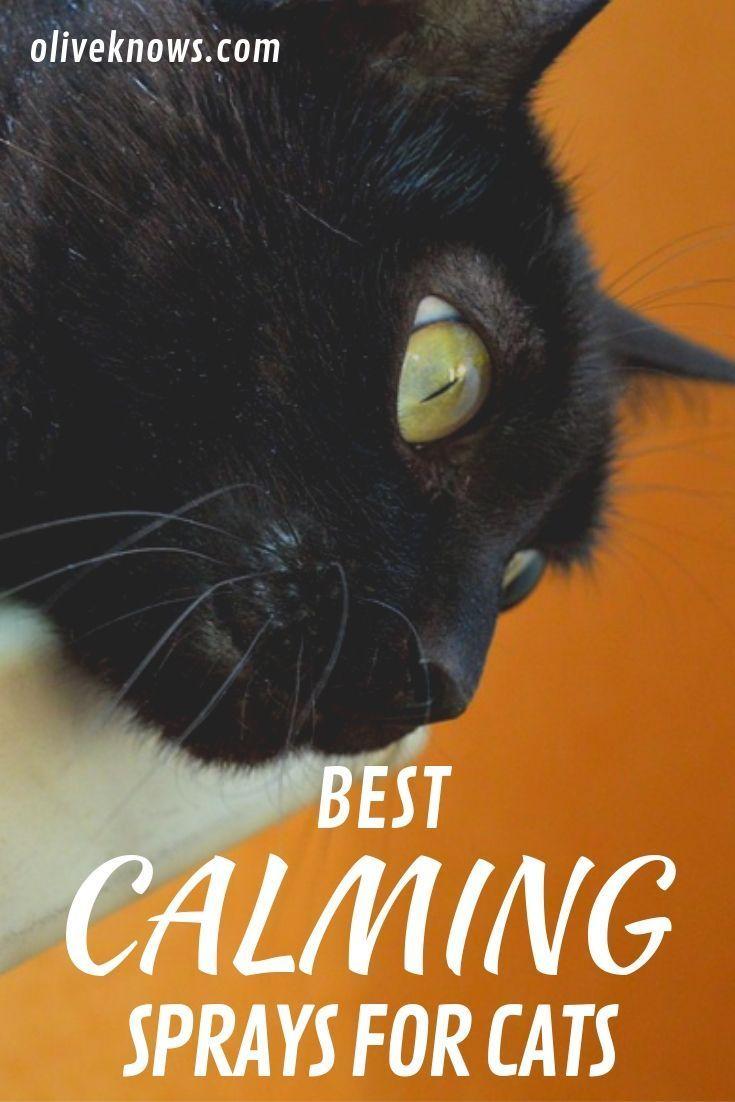 Best Calming Sprays for Cats Cat parenting, Cat training