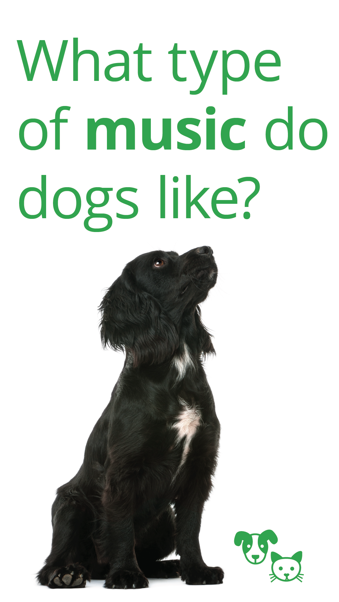 Do Dogs Like Music Obedience School For Dogs Dog Boarding Near