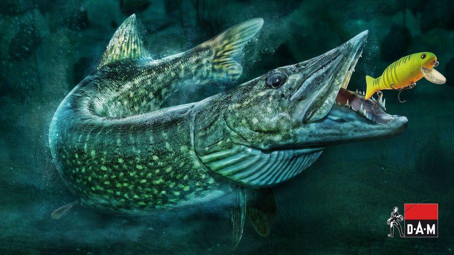 Fishing Fish Predatory Fish Vobler Viper Dam Pike Fish Wallpaper Fish Artwork Fish