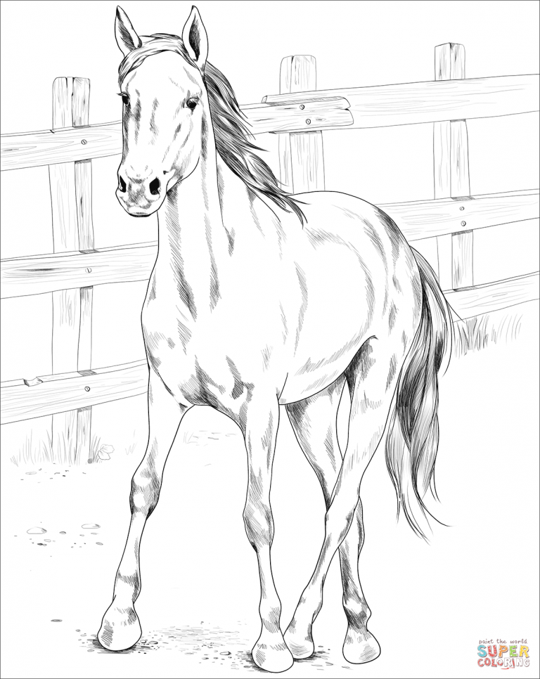 Kiger Mustang Coloring Pages Horse Coloring Pages Horse Coloring Books Coloring Pages