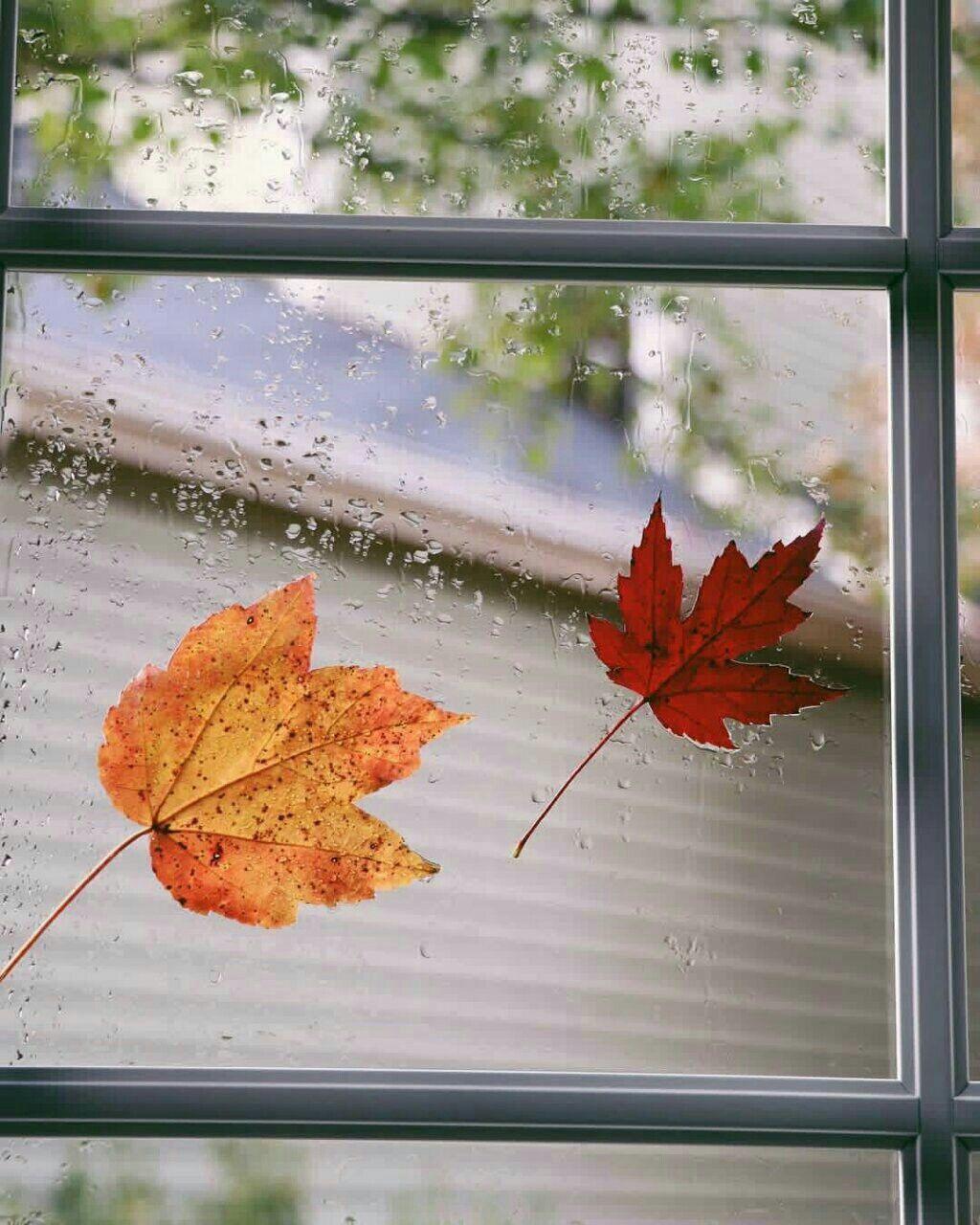 مساؤكم سعادة دائمة إذا فقدت شيئا تحبه فتذكر أن الأشجار تفقد كل أوراقها في الخريف لتكتسب غيرها في الربيع فـالحياة ما هي Canada Flag Art Country Flags
