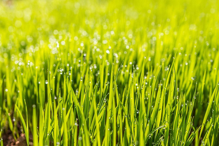 Timing Is Everything When Is The Best Time To Plant Grass Seed Planting Grass Grass Seed Fall Lawn Care