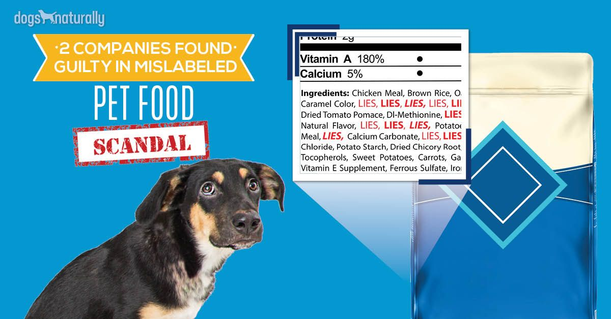 Seizures In Dogs Natural Options That Work Dog Food Recipes