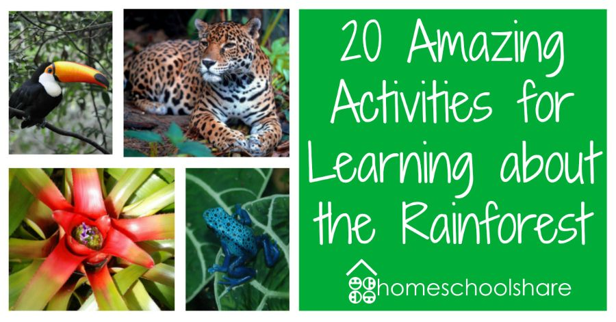 20 Amazing Activities for Learning about the Rainforest