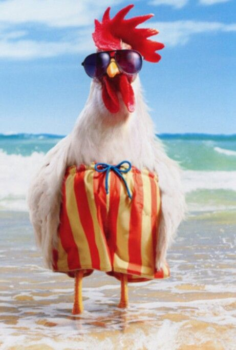 Pin By Suzie On Funny Chicken Funny Birthday Cards Happy Birthday Funny Birthday Humor