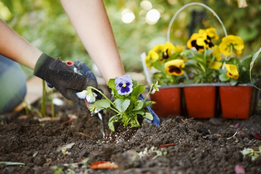 March 12, National Plant A Flower Day | National Days | Pinterest | Plants,  Planting And Gardens