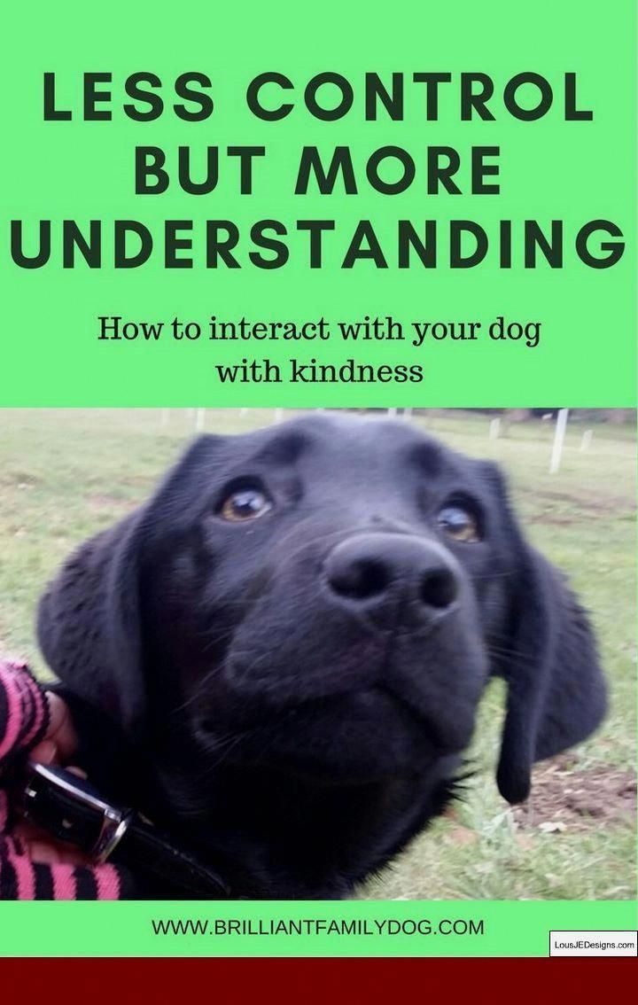 Training A Dog To Stop Barking At Other Dogs And Pics Of Tips For