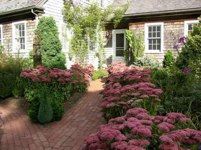 Garden Paths Sedum Autumn Joy Garten Vorgarten