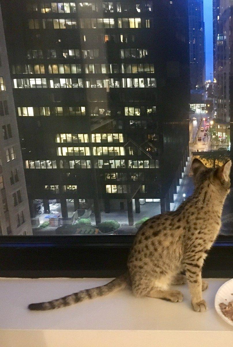 Recap Winn Feline Foundation Symposium On Ending Fip Is There Hope Feline Cat Ownership Failure To Thrive