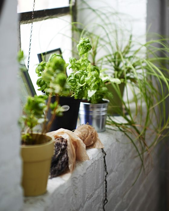 A windowsill is the perfect spot for a mini indoor urban garden a windowsill is the perfect spot for a mini indoor urban garden workwithnaturefo