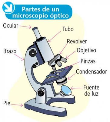 Resultado de imagen para dibujo de microscopio y sus partes ...