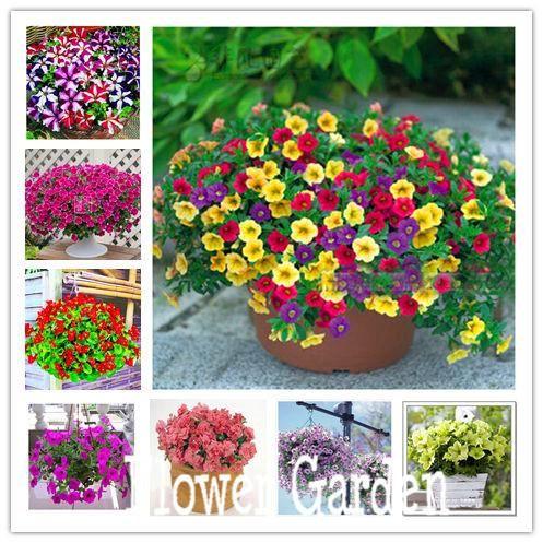 24 kinds hanging petunia seeds garden petunia seeds mixed color 200 seeds