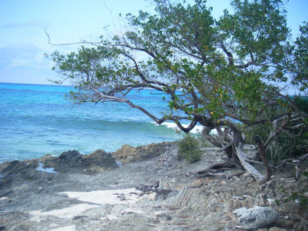 Guana Cay <3