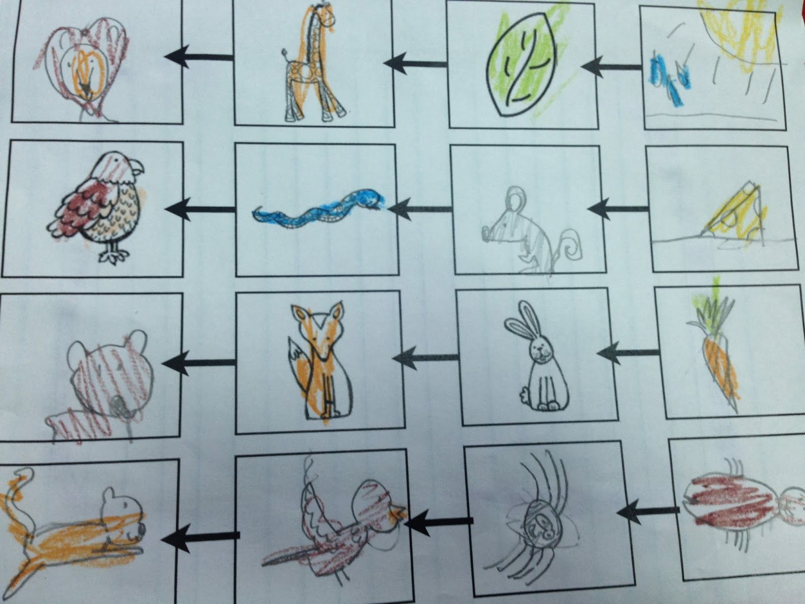 Habitats Amp Food Chains