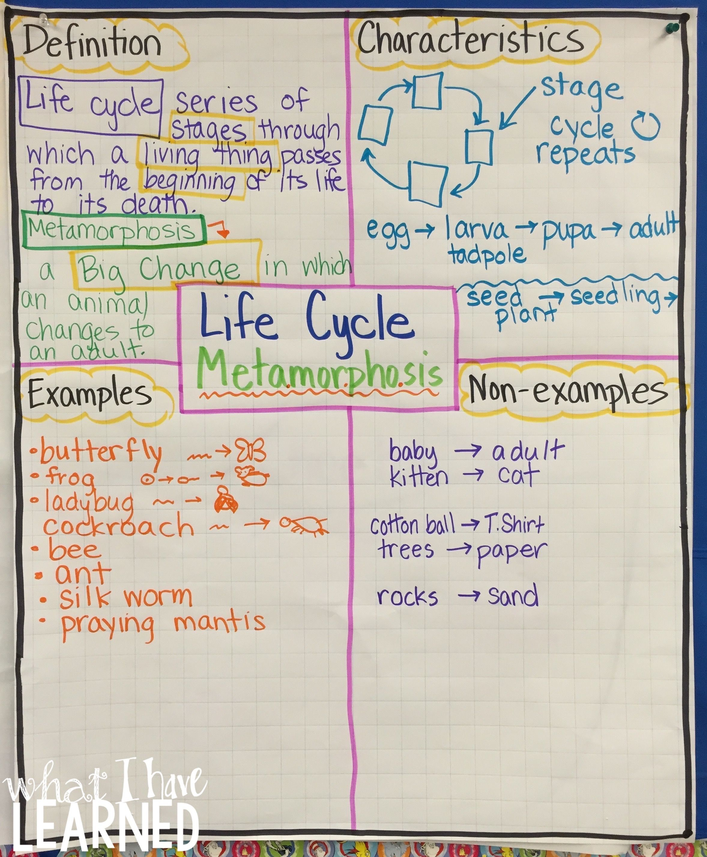 Life Cycles Amp Metamorphosis Science Stations Articles Amp Graphic Organizers
