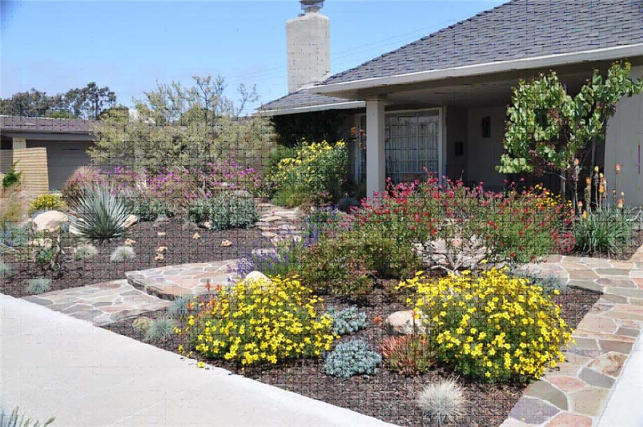 Drought tolerant landscaping ideas california san diego for Drought tolerant yard
