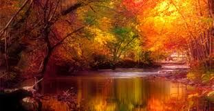 Image result for fall autumn