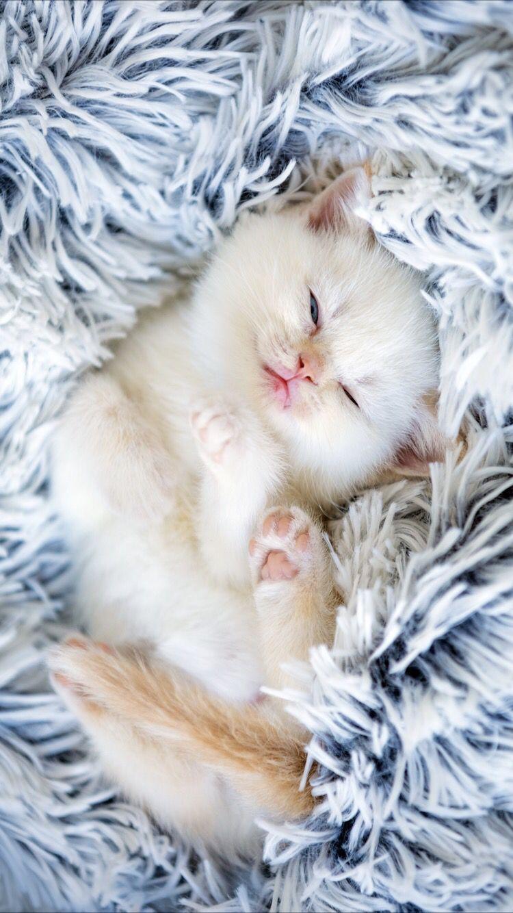 Cute Funny Kitten Mobile Wallpaper Kittens Cutest Kitten Pictures Kitten Wallpaper
