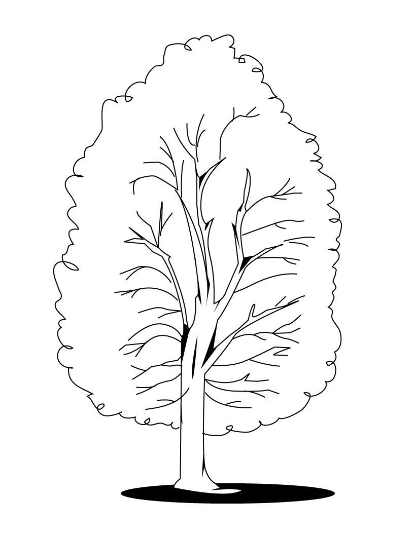 Free Printable Tree Coloring Pages For Kids | Fall trees, Nature ...