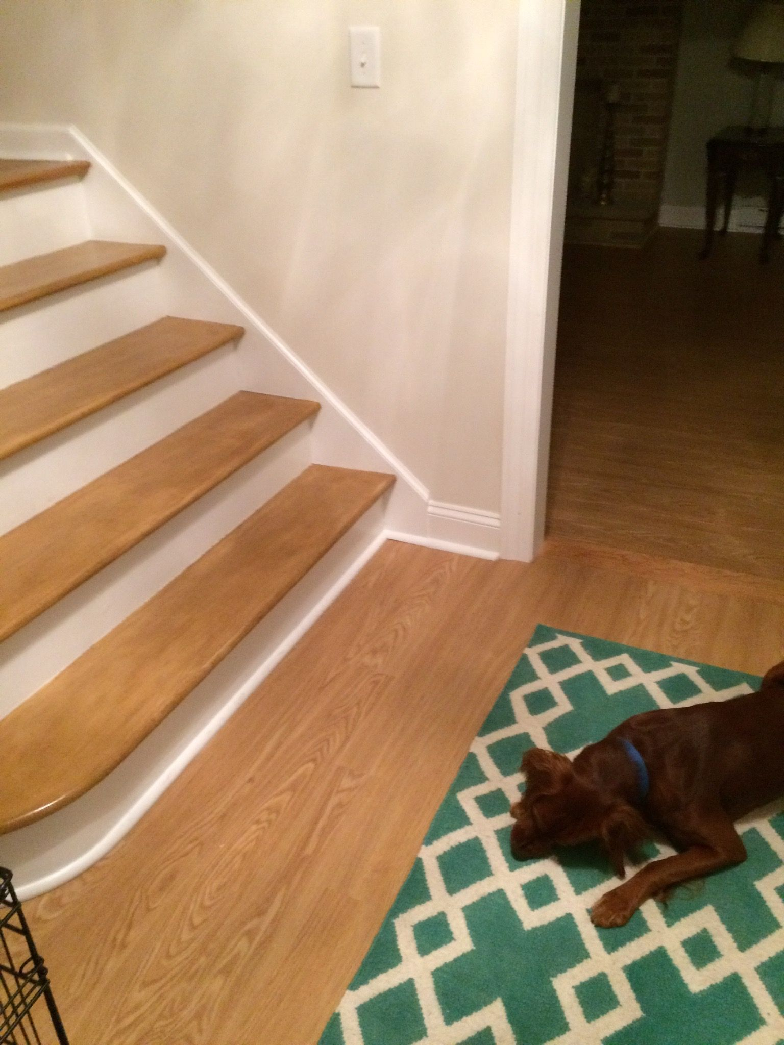 Coretec Plus 5 Quot Rocky Mountain Oak On The Floors We