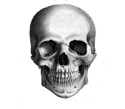 realistic skull drawing - Google Search in 2019 | Anatomy ...