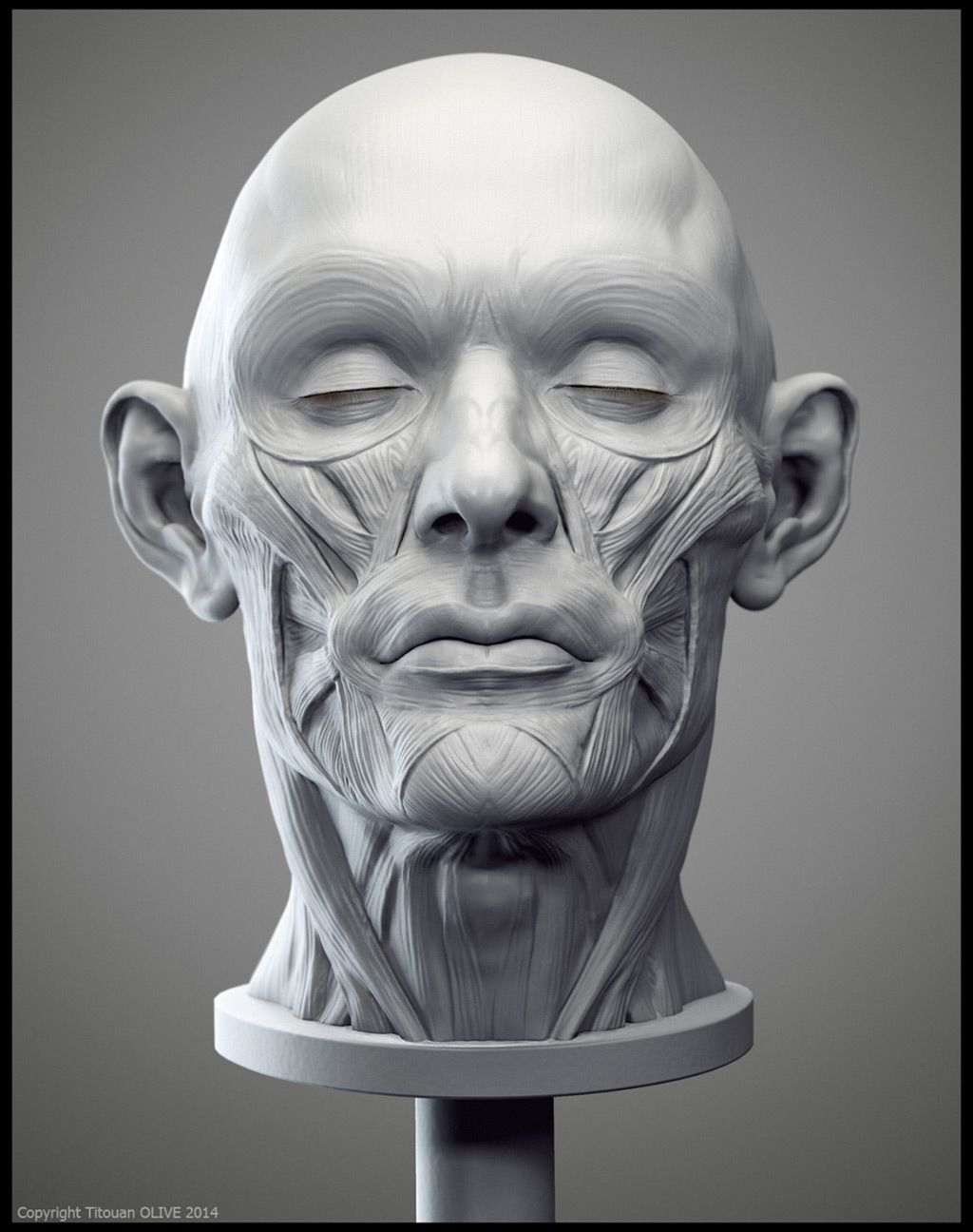 Pin By Greg Faherty On Facial Anatomy Reference In 2018 Pinterest