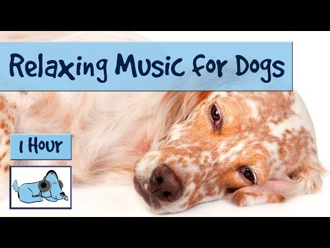 1 Hour Of Relaxing Music For Dogs Music For Dogs And Fireworks