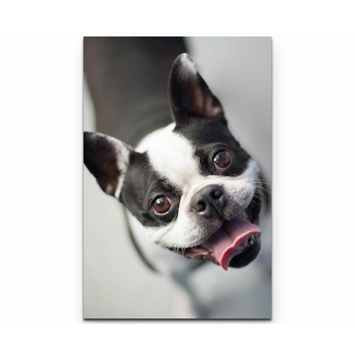 On Canvas East Urban Home Size 90cm L X 60cm W Boston Terrier