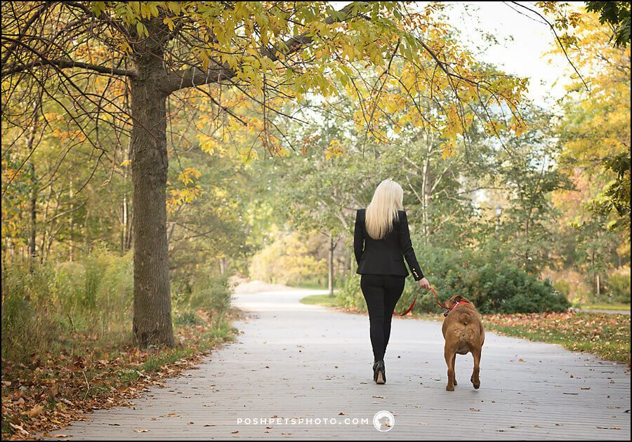 Toronto dog walker dog walker animal photography dogs