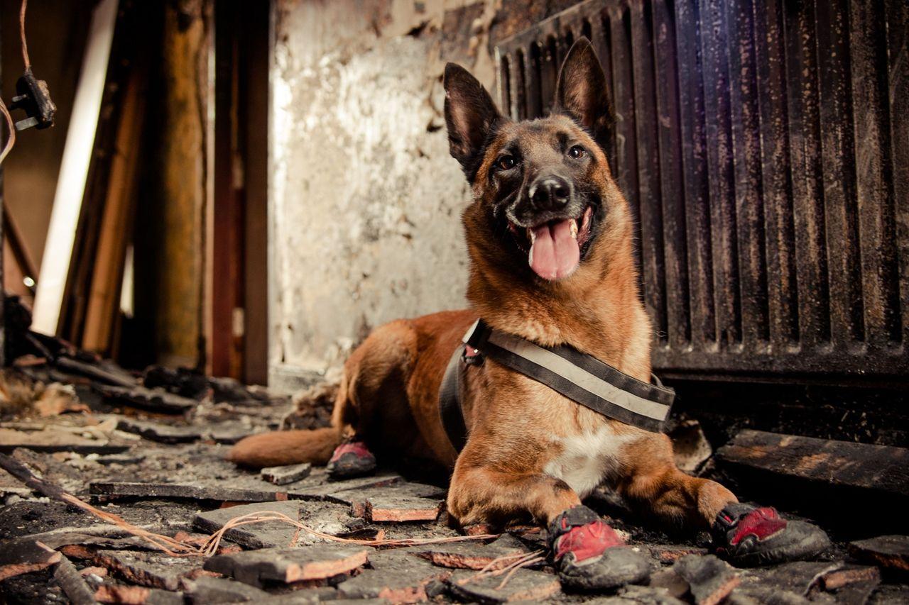 Картинки след собаки и кошки части