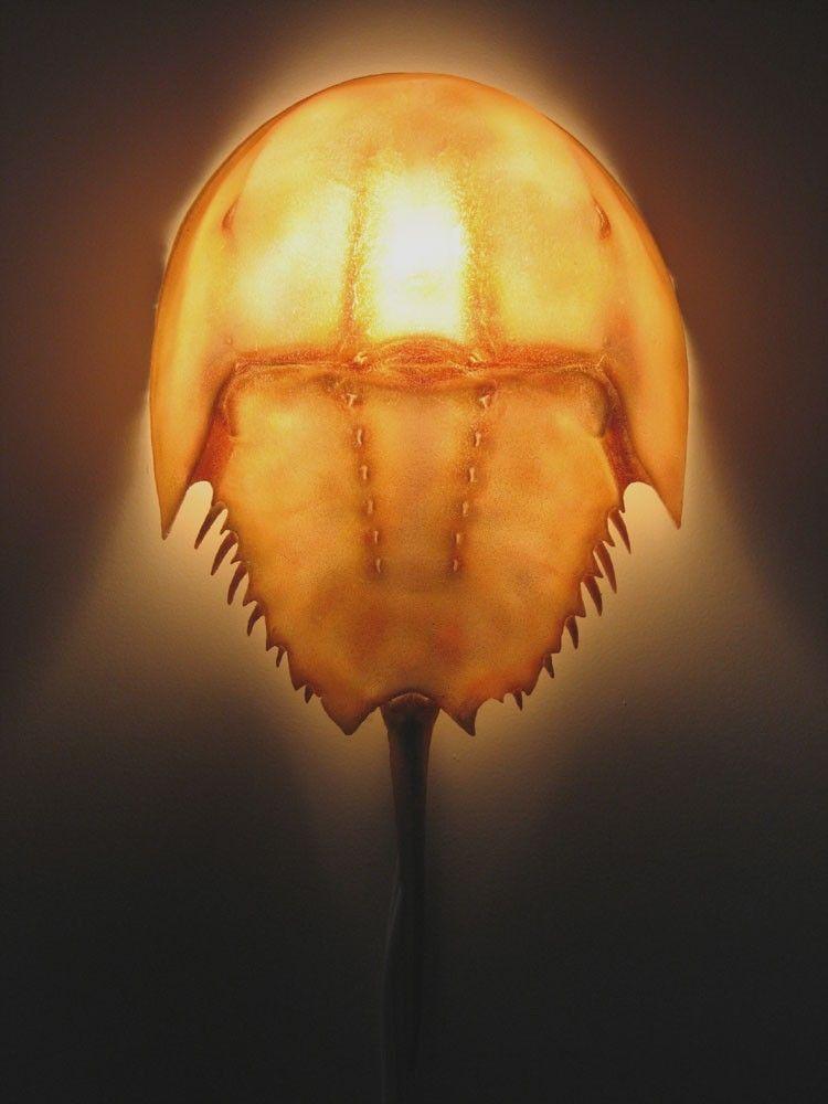 Horseshoe Crab Wall Sconce Lamp. $100.00, via Etsy.