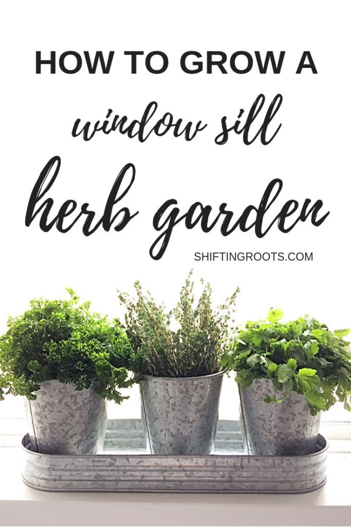 How to Start an Indoor Herb Garden from Seeds