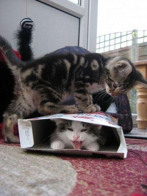 ackkk get off, get off, GET OFF! MOM, make him get off me.