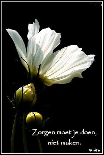 Grappige Citaten Leven : Spreuken en wijze gezegden hyve hyves hoopvolle