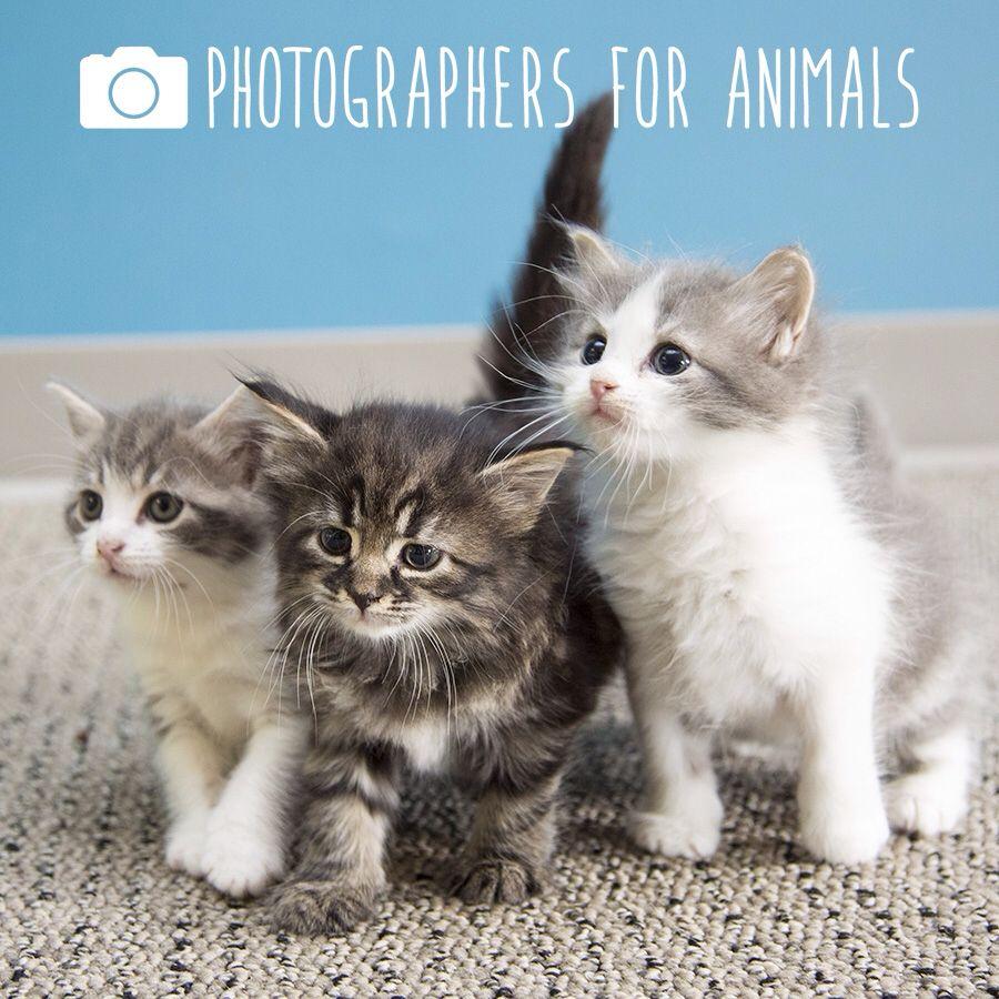 Photographers for Animals Volunteer photographer, Cat s
