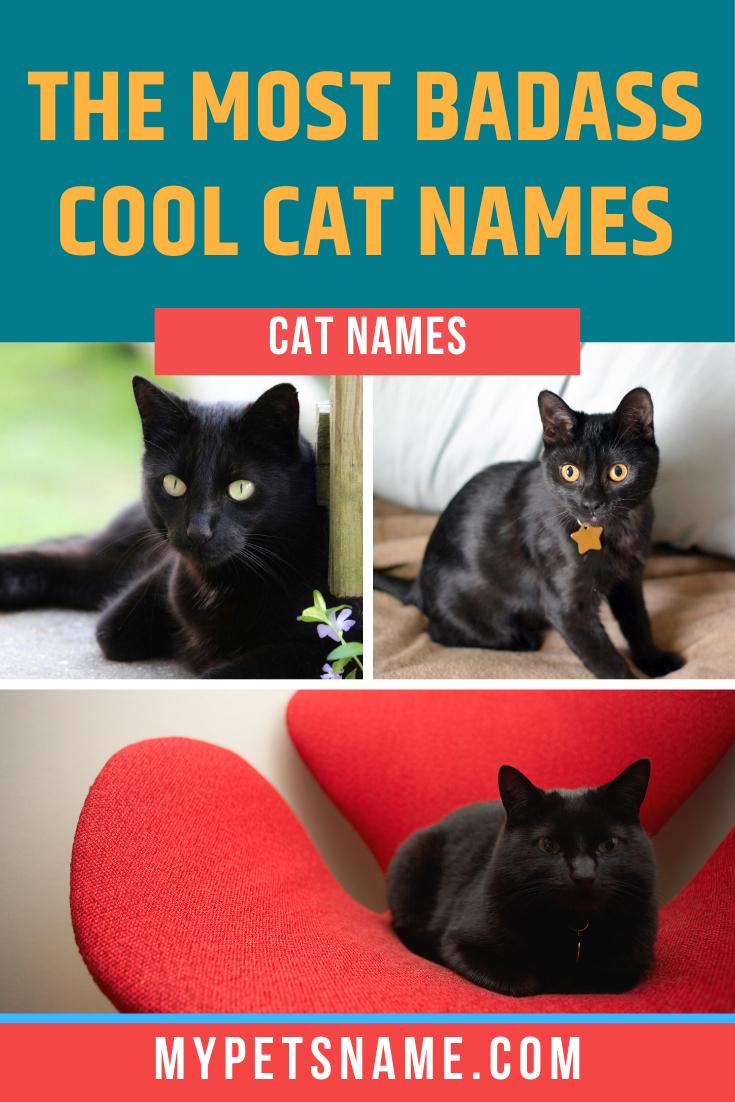 Badass Cool Cat Names In 2020 Cat Names Cool Cats Badass Cat Names